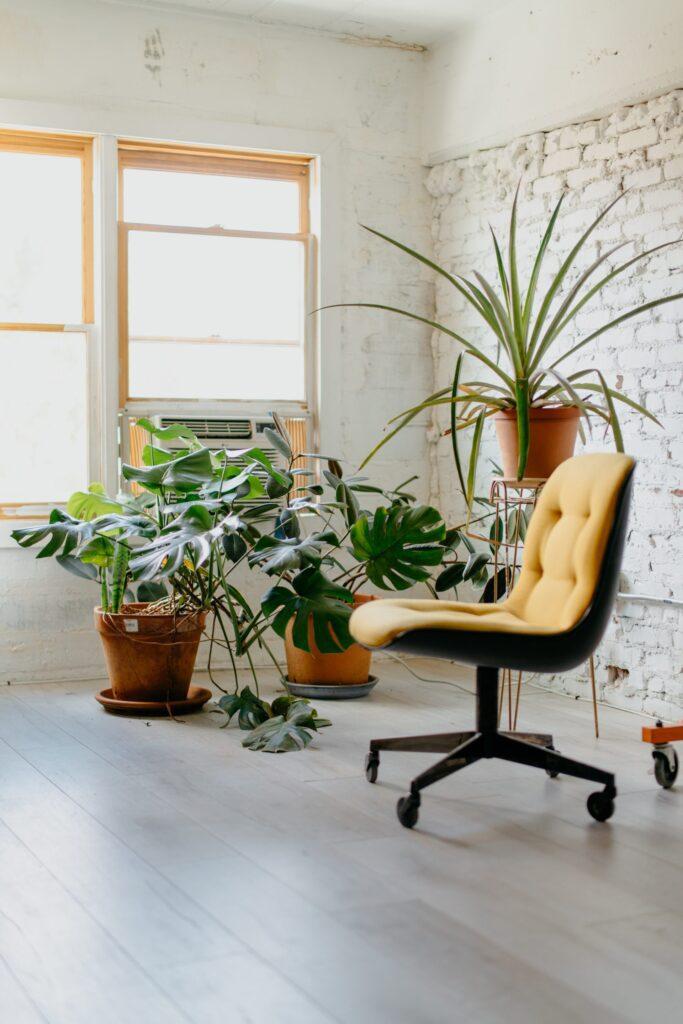stolicka-rastlina-okno-podlaha