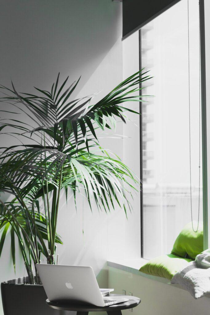 rastlina-okno-okruhly-stol-stena-svetlo