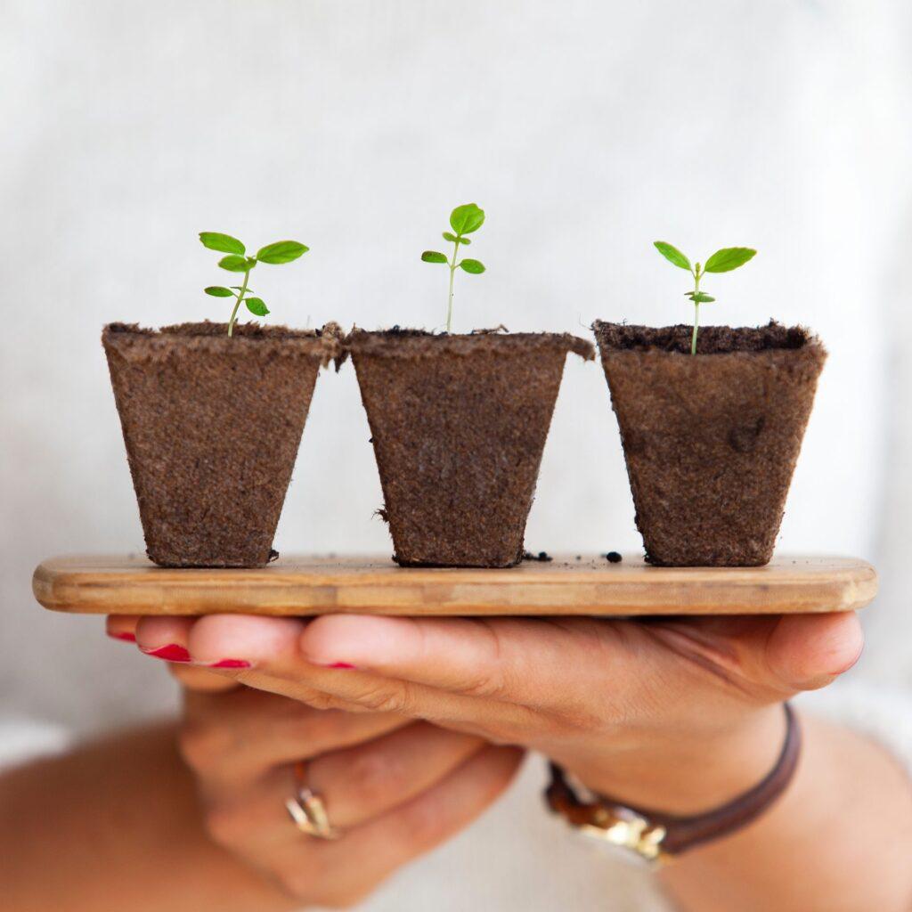 Ruky-drevena-podlozka-zemina-rastlinky