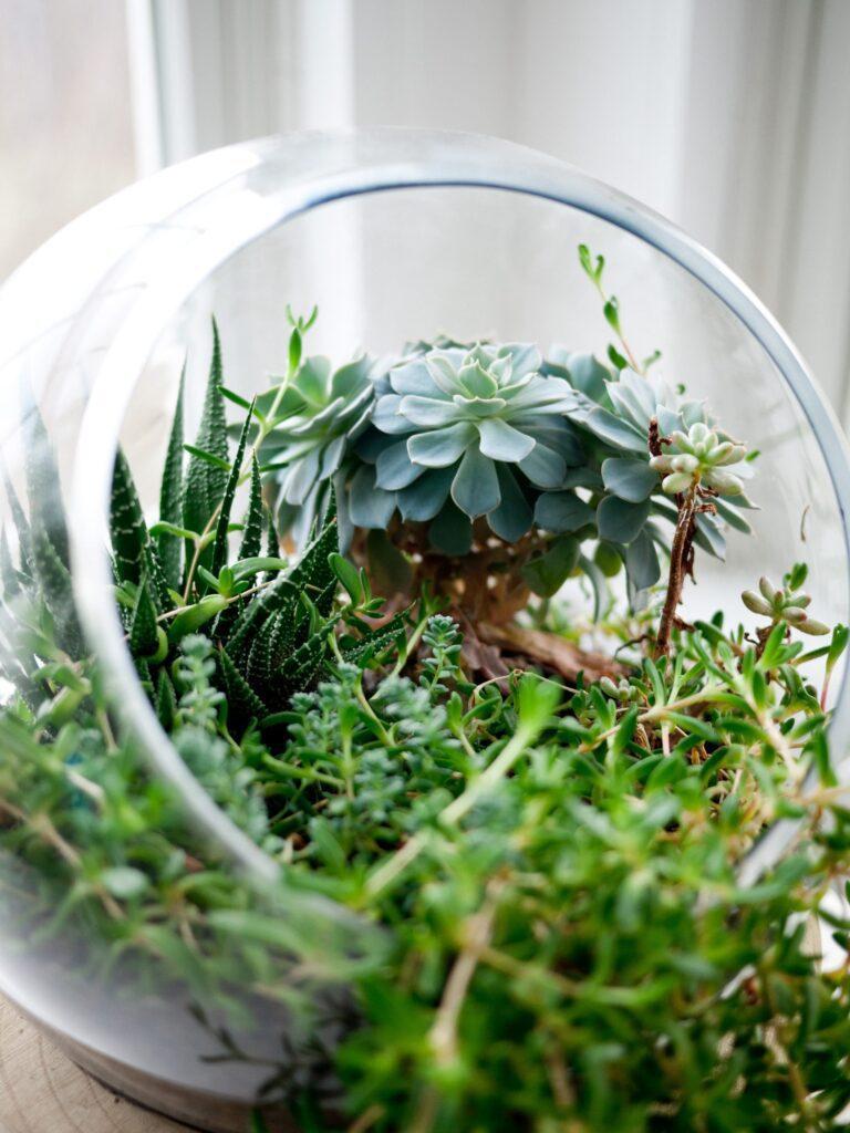 Sklenena-nadoba-rastliny-svetlo